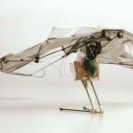 Microglider: vliegende robot geïnspireerd op sprinkhanen en vleermuizen